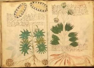 Ancora il manoscritto di Voinych