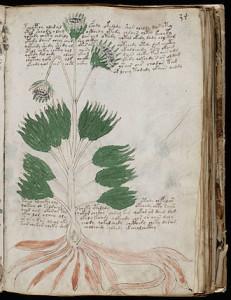Una delle piante ignote raffigurate nel codice